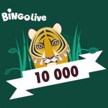 Bingo 10 000 Jungle